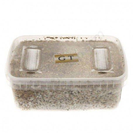 Buy Mondo® Grow Box