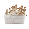 Magic mushroom grow kit Ecuador XP