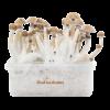 Magic Mushroom Grow Kit Mexican XP
