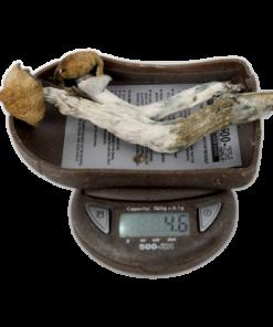 Buy Digital Pocket scale